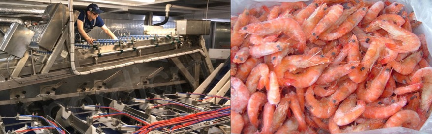 Equipment for shrimp processing